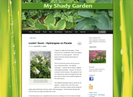 Website Design- Recent Work